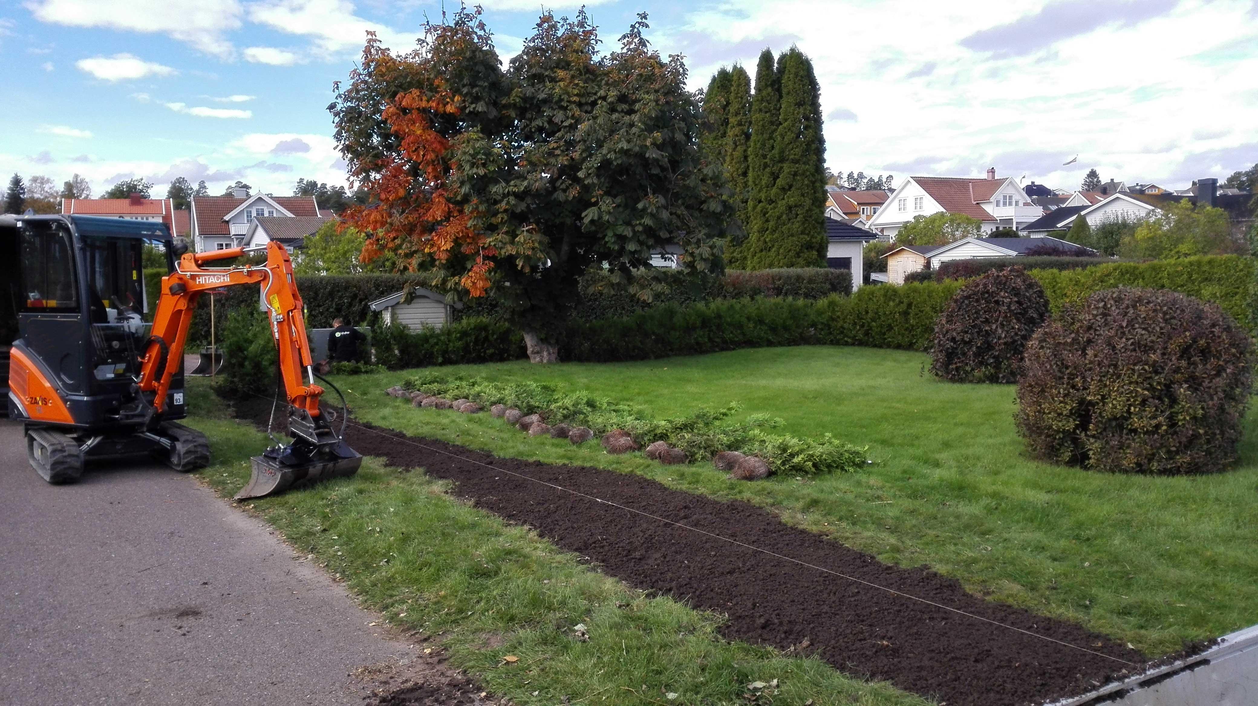 planting av hekk - foto